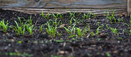 Enrich the soil during the winter months